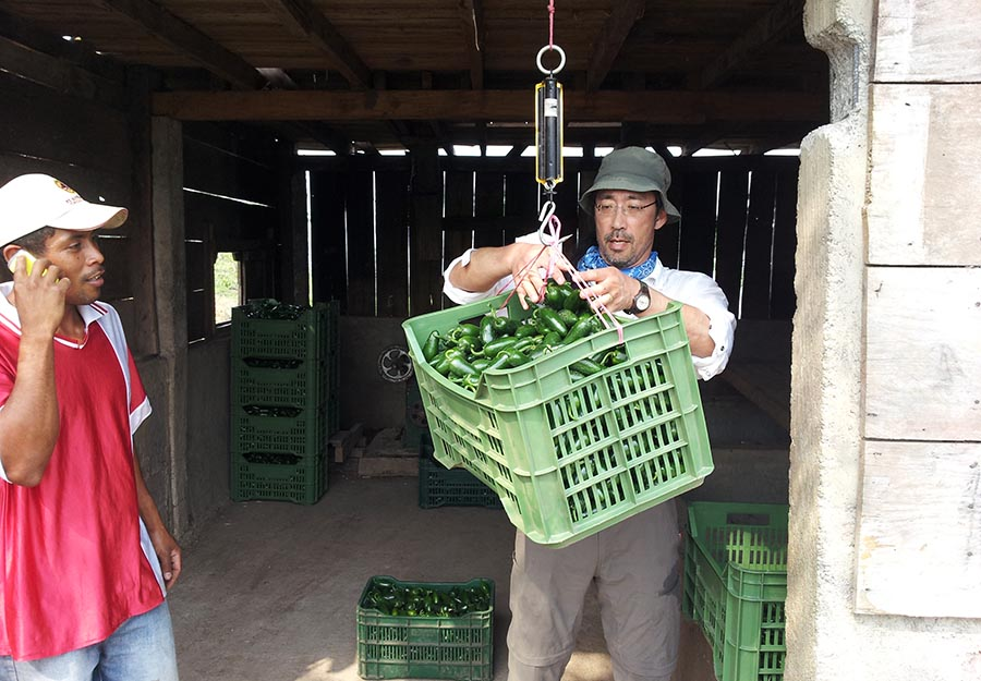 Agroaldea San José generates sustainable income by selling its produce. Here, ELM partner Daniel Ichinaga learns to weigh peppers for shipping.